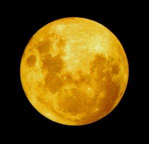 Moon_rabbit_rotated3